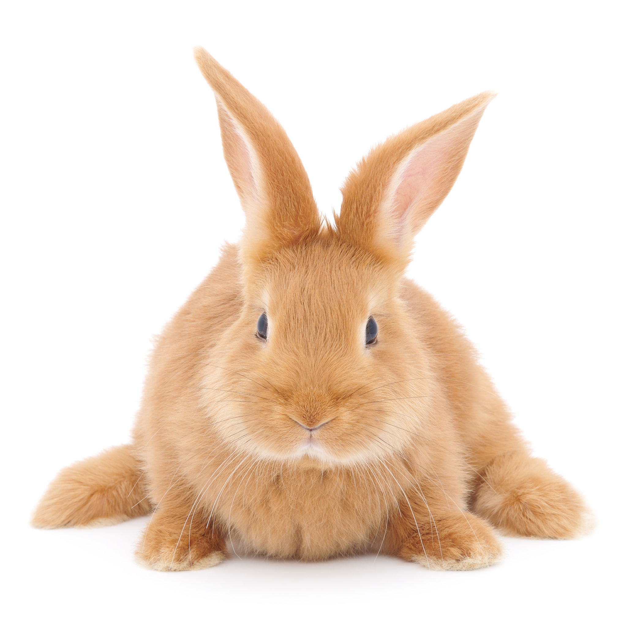Reasons you should use cruelty-free makeup